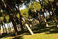 ® S.D. MADRID PARQUE DEL OESTE - PRADERA DESCENDENTE - panoramio (7).jpg