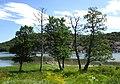 Åbyfjorden vid Nordens Ark 1.jpg