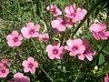 Çiçek 4.JPG