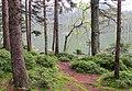 Čertovo jezero (6).jpg