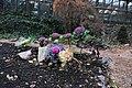 Весна в запорожском ботаническом саду.jpg