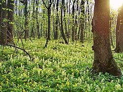 Все апрельские цветы в дубраве.jpg