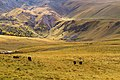 Горные склоны в урочище Джилысу, сентябрь 2014. 04.jpg