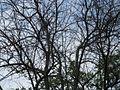 Дендрологічний парк 229.jpg