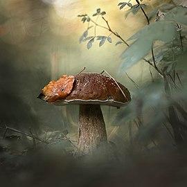 Идём, как в сказку, по грибы.jpg
