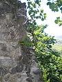 Невицький замок 5.jpg