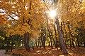 Парк Кочубеївський, золота осінь.jpg