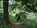 Парк шума Гази Баба во мај (104).JPG