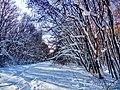 Региональный ландшафтный парк «Диканский» зимой 1.jpg