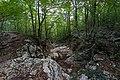 Русло пересохшего ручья над Большим каньоном Крыма.jpg
