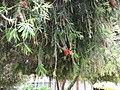 Экая растительность - panoramio.jpg