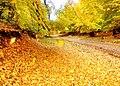 برگریزان پاییز رامیان، جنگل نیلبرگ.JPG