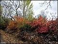 دیدنیهای پاییز مراغه - panoramio (2).jpg