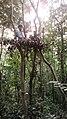 খাসিয়া কিশোর, লাউয়াছড়া জাতীয় উদ্যান.jpg