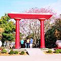 ガルサ桜祭り.jpg