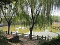 古镇小湖 - panoramio.jpg