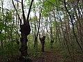 台場クヌギの林.jpg