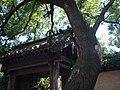 唐代槐树与古门台 - panoramio.jpg