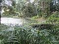 士林官邸生態池 Eco Pond in Shilin Official Residence - panoramio.jpg