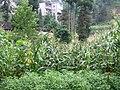 夏季木杆 - panoramio.jpg