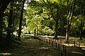 東高根森林公園 - panoramio (9).jpg