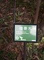 植物園中的植物及樹木花草(包括歷史遺跡)-36.jpg