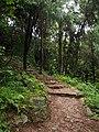 神仙居南登山道 - South Trail to Shenxianju神仙居南天索道 - South Cableway of Shenxianju - 2014.06 - panoramio.jpg