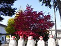 紅葉見物(Autumnal haunts ) - panoramio.jpg