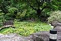 蓮池 Waterlily Pond - panoramio.jpg