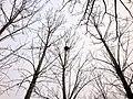 鳥巢 - panoramio (2).jpg