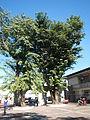 01261jfCabanatuan Church Parish Talavera Nueva Highwayfvf 09.JPG