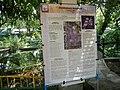 05704jfMidyear Orchid Plants Shows Quezon Cityfvf 41.JPG