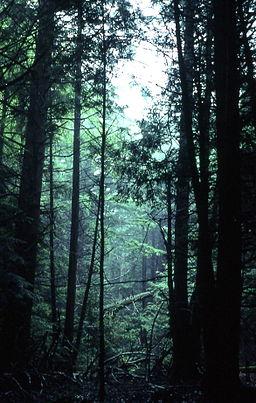 1-Pine-Forest-(Fallsburg)-2