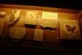 10298465 - Fóssil - Museu Nacional de História Natural UFRJ - 22 Outubro 2010 - Rio de Janeiro - Brazil.jpg