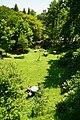 170811 Rokko Alpine Botanical Garden Kobe Japan01s3.jpg