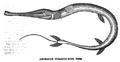 1834 TobaccoPipeFish AmericanMagazine v1 Boston.png