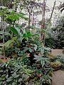 1923. Botanical Garden. In the greenhouse of tropical plants.jpg