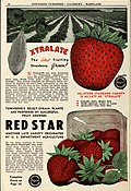 1946 catalog of fruits (1946) (16048263064).jpg