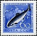 1959 CPA 2332.jpg