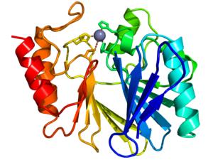 Metallo-beta-lactamase protein fold