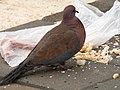 2006.01.11 m016 bird - tzotzelet (shrunk).jpg