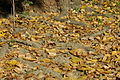 2007-10-13 (1) Leaf, Blätter, damm ginsheim-gustavsburg.JPG