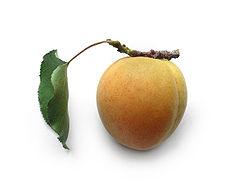 https://upload.wikimedia.org/wikipedia/commons/thumb/1/14/20070107_Apricot.jpg/250px-20070107_Apricot.jpg