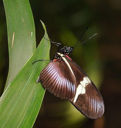 2011-04-25-lepidoptera-hunawihr-3.jpg