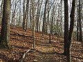 2016-02-08 14 02 17 View north along the Gerry Connolly Cross County Trail between Vale Road and Lawyers Road in Oakton, Fairfax County, Virginia.jpg