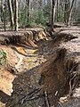 2016-03-01 14 18 41 View down a severely eroded tributary of Little Difficult Run within Fred Crabtree Park in Reston, Fairfax County, Virginia.jpg