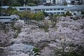 20160403 Himeji-Castle 3351 (26826013295).jpg