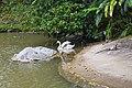 2016 Singapur, Jurong Bird Park (108).jpg
