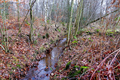 2018-12-22-December-watercolors.-Hike-to-the-Ratingen-forest. File-21.png