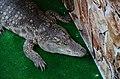 2019. Крокодиловый каньон в Ейске 023.jpg